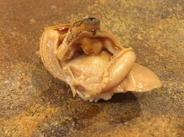 Common orient clam (Nihamaguri)
