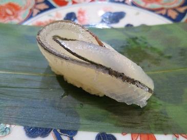 Japanese halfbeak (Sayori)
